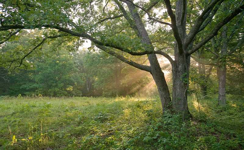 by: SUBMITTED PHOTO - A glimpse of the rare 14-acres on the White Oak Savanna.