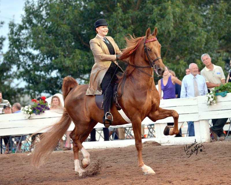 by: SUBMITTED PHOTO - Karen Lachman shows her horse, Hubris, in August at the National Championships in Louisville, Ky.