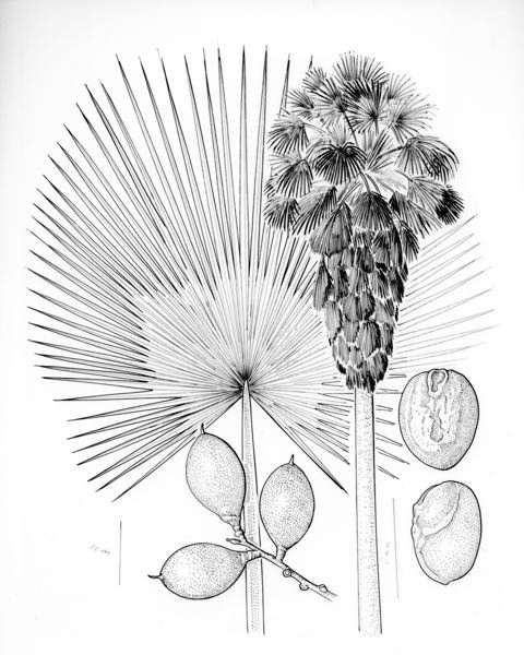 Meyers uses a variety of technical pens and pencils to complete his drawings.