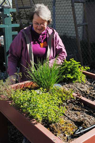 by: NEWS-TIMES PHOTO: STEPHANIE HAUGEN - This table top garden is ideal for those who have difficulty bending or need support.