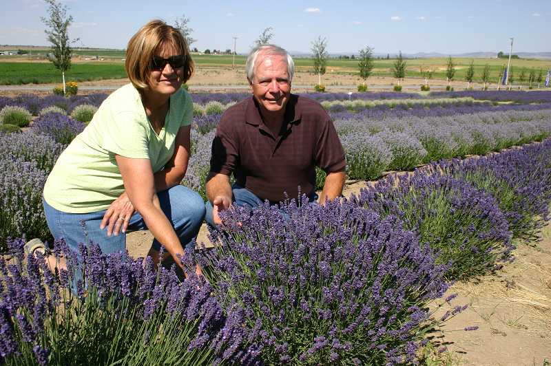 Terry and Wayne Pearson in their lavender field.