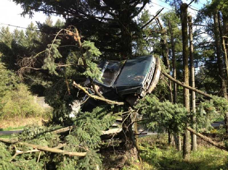 by: PHOTO COURTESY OF TVF&R - Washington County Sheriff's deputies are still trying to determine how this truck landed in a tree off of Highway 99W near Sherwood, Sunday morning.