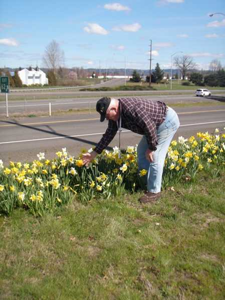 by: COURTESY PHOTO: JERRRY MAASDAM - Arden Sheets digs daffodils every summer to plant throughout Hillsboro.