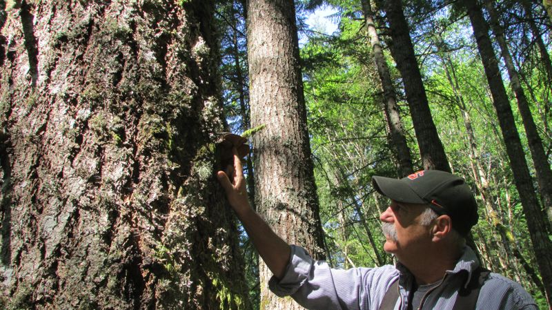 by: SPOTLIGHT PHOTO: ROBIN JOHNSON - Jay Worley has been working as a forester in Oregon for more than 40 years. He graduated for Oregon State University with a degree in forestry.