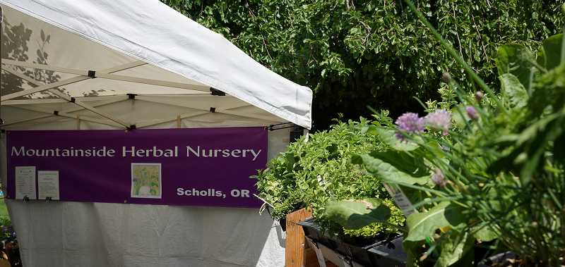by: COURTESY PHOTO: BRIAN HARRIS - Krista Olsen-Rahf of Mountainside Herbal Nursery started the season at the Hillsboro farmers market, and is getting ready for Forest Groves market, where she will sell a wide variety of unusual herbs.