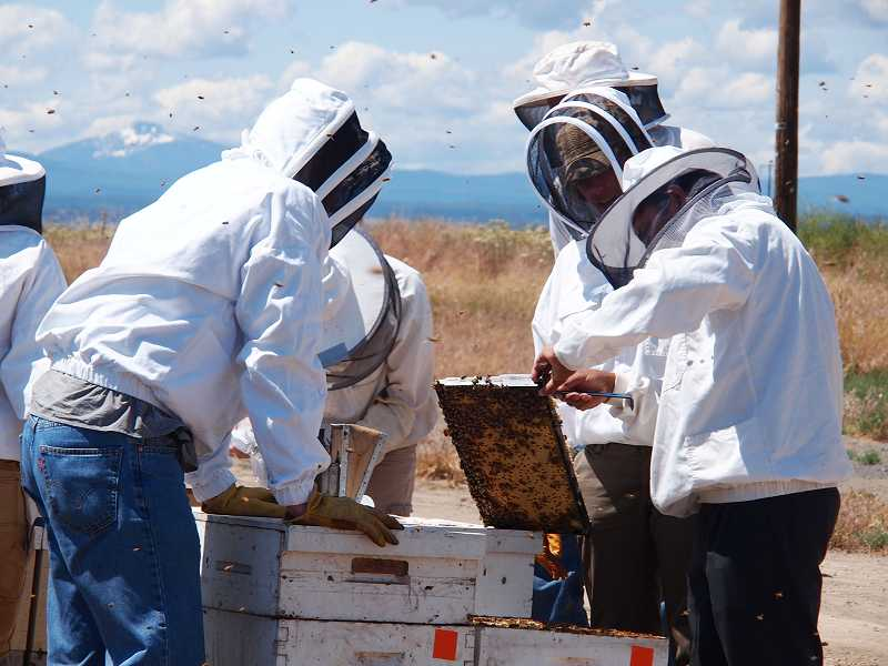 by: SUBMITTED PHOTO - Faculty members check honeybee hives and explain research to visitors.