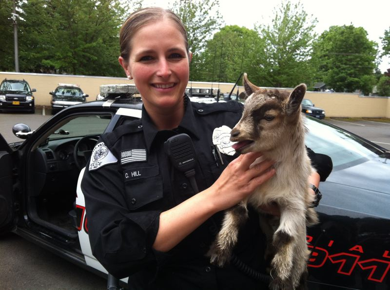 by: PHOTO COURTESY: MILWAUKIE POLICE DEPARTMENT - Milwaukie Police Officer Crystal Hill holds one of the two baby goats that she helped round up on Sunday.