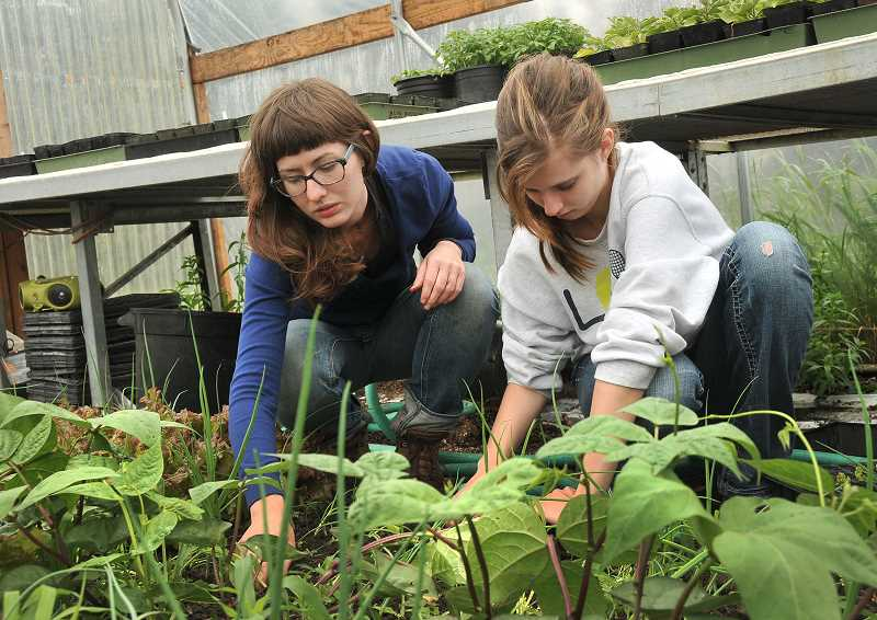 by: VERN UYETAKE - Holly Markham works inside the CREST farm greenhouse with Lindsay Landford  from Wilsonville High School.