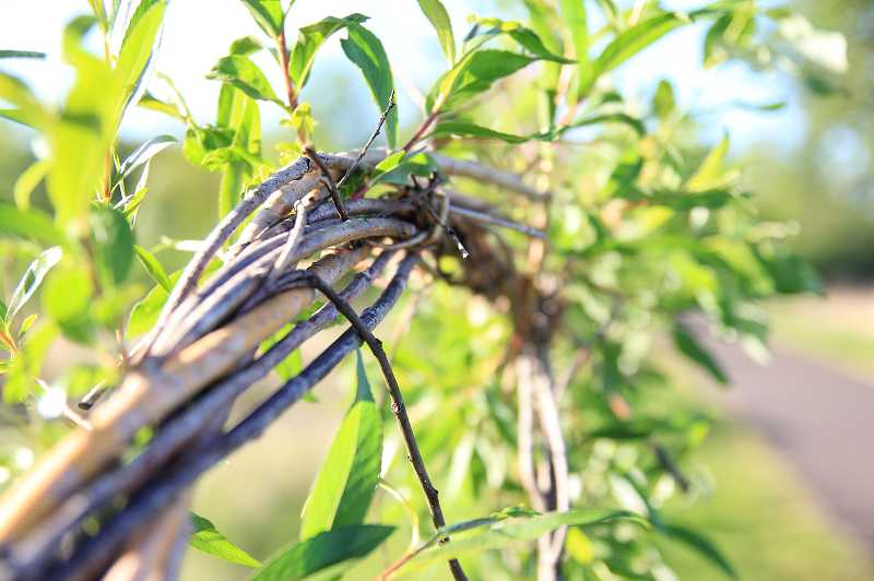 by: NEWS-TIMES PHOTO - Woven willows usually stay put.