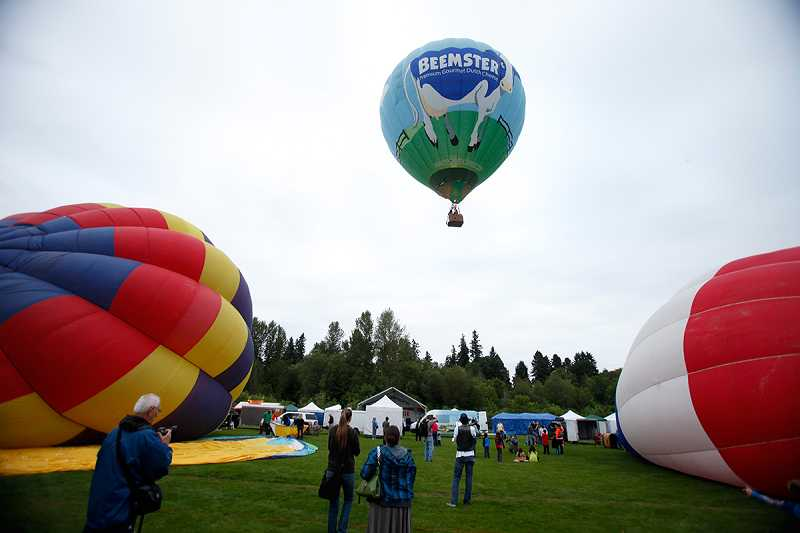 by: JONATHAN HOUSE - The 'Beemster' balloon takes off as two others inflate during Friday's Tigard Festival of Balloons. The festival runs Friday-Sunday with balloon launches every morning at dawn, weather permitting.