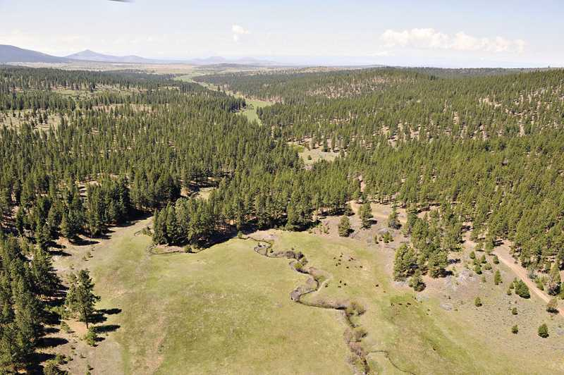 by: SUBMITTED PHOTO - Willow Creek originates on the Foley Butte property, now offered for sale by Ochoco Lumber Co., in Jefferson and Crook counties.