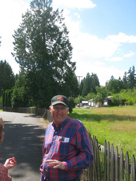 by: 2010 FILE PHOTO: RAYMOND RENDLEMAN - Before being elected to City Council, Mike Miller joined a group trying to protect this 60-foot Western Red Cedar in his Lake Road neighborhood. In a work session on July 2, other members of City Council agreed that more tree rules were needed and directed city staff to schedule public-outreach events to prepare for drafting ordinances.