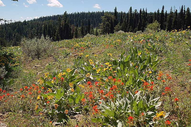 by: PHOTO BY SCOTT STAATS - A patch of wildflowers on Lookout Mountain gives color and life to the landscape