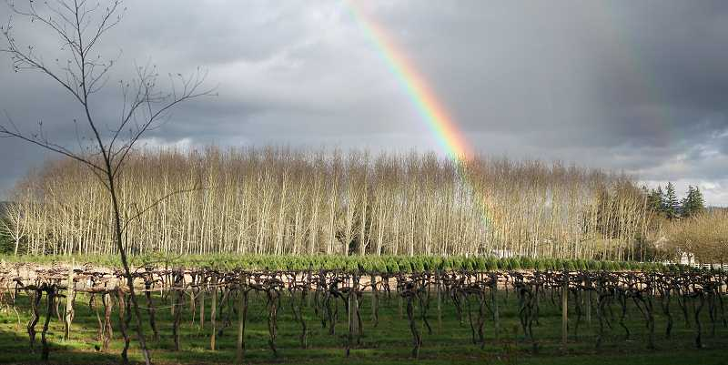 by: COURTESY OF HEIDI HOFFMAN - A double rainbow over the Alexeli vineyard and winery. Phil Kramer purchased the land in 2008, and most of the vines were planted in 1981.