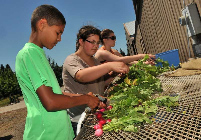 by: PAMPLIN MEDIA GROUP: VERN UYETAKE - Student interns wash newly harvested vegetables for CSA shares on July 11. From left are eighth-graders Gabe Arnattoe and Katharine Koehler and Danielle Grenier, an intern from Linfield College.