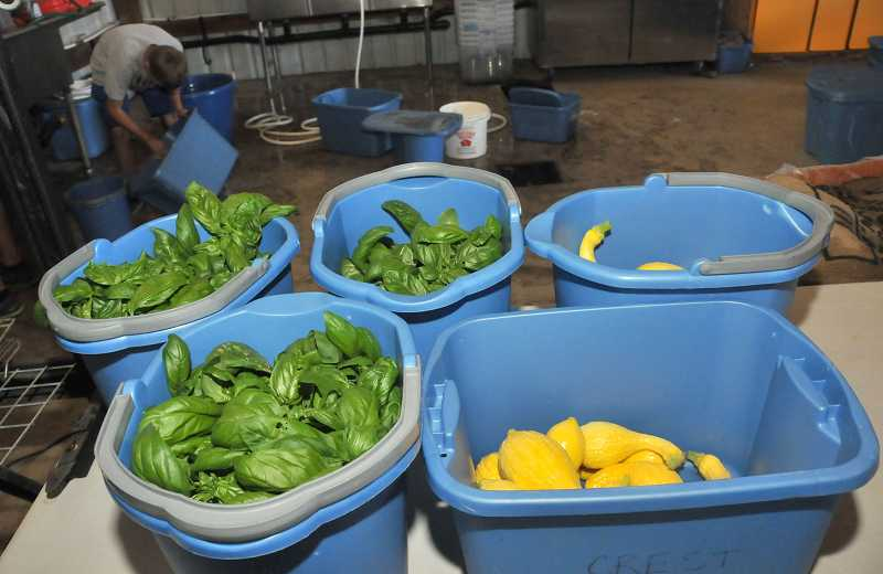 by: PAMPLIN MEDIA GROUP: VERN UYETAKE - On July 11, CSA shares included summer squash and basil.