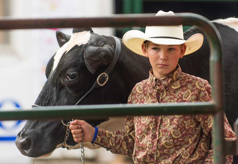 by: RAY HUGHEY - Jared Fleck, 13, of Post, Ore., hangs on  to a holstein entry for a friend.