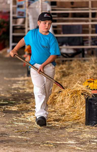 by: RAY HUGHEY - Jason Hansen, 9, of Molalla, takes care of some show barn chores.