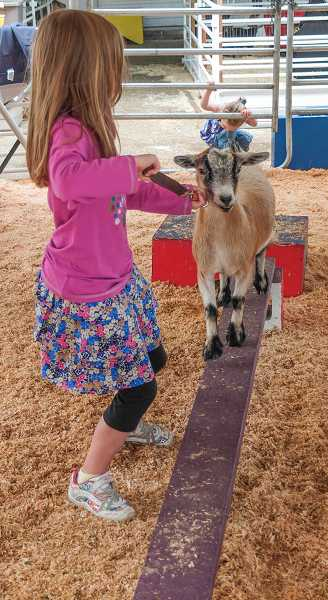 by: RAY HUGHEY - Samantha Harrigan, 7, of Silverton, helps a pygmy goat do a balancing act.