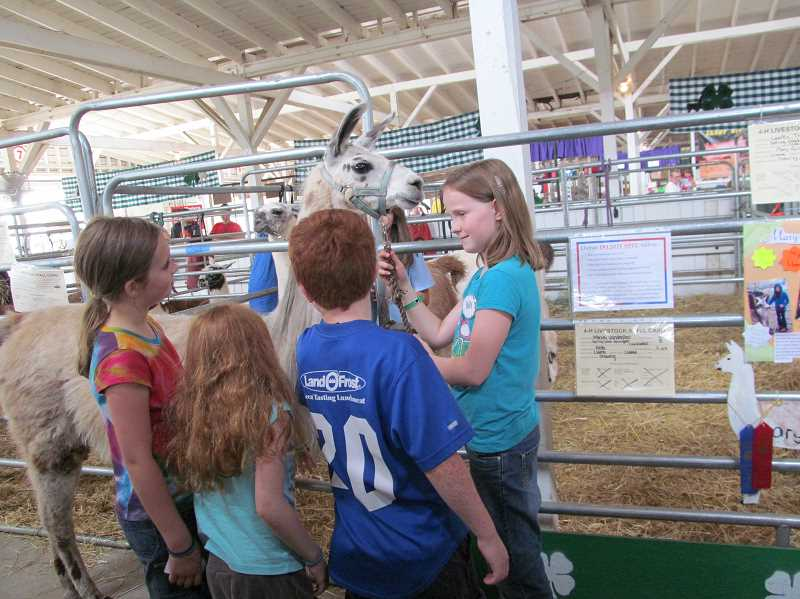 by: ELLEN SPITALERI - Holly Jones, 10, West Linn, tells a group of children that it is OK to pet her llama, Olympe. She won a Clackamas County Fair red ribbon in the handling division with Olympe.