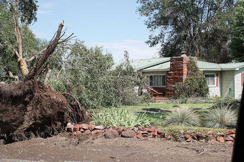 by: STEVE KEEVER - A tree came crashing down in front of a residence on the corner of Northeast McFarlane Lane and Northeast Clemens Drive in Gateway on Sunday afternoon, but missed the house.