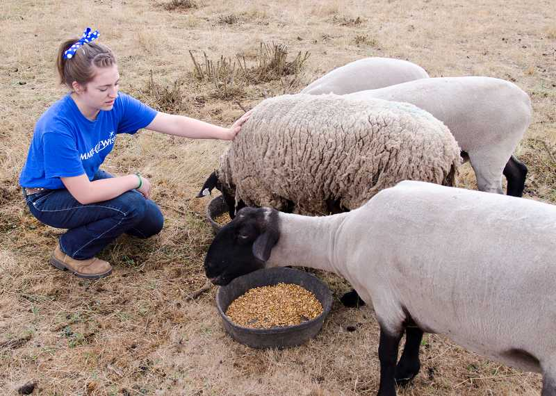 by: HUGHEY - Olivia Palacios keeps five sheep on her parents' Aurora area farm.