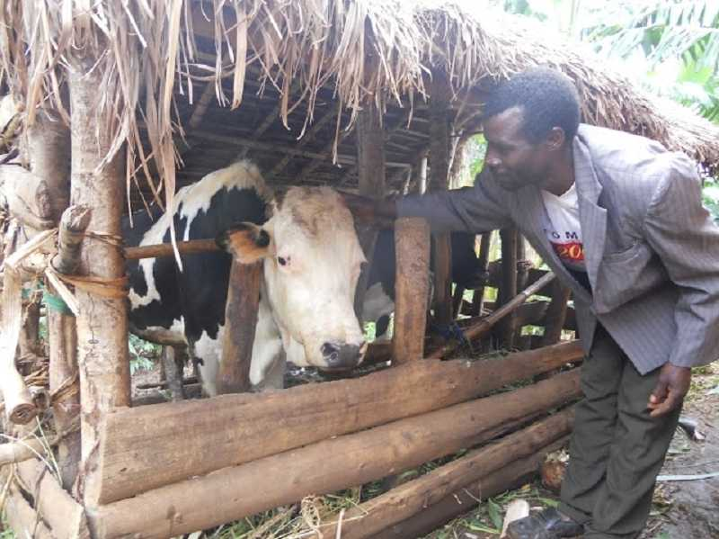 by: SUBMITTED PHOTO - As part of the program, each participating family receives a hybrid cow that produces three times as much as indigenous cattle.