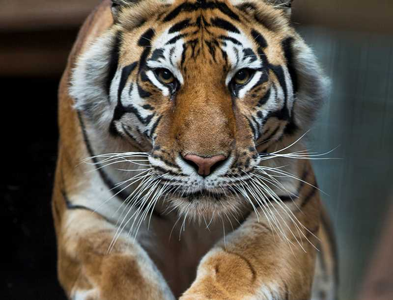 by: KARINE AIGNER