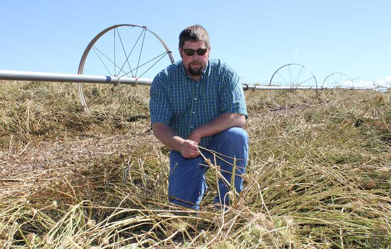by: SUSAN MATHENY - Greg Williams, farmer and fieldman for Central Oregon Seeds Inc., shows the damage to his carrot field. Williams estimates county crop and equipment damage from the Aug. 25 storm will be in the $6 million to $7 million.