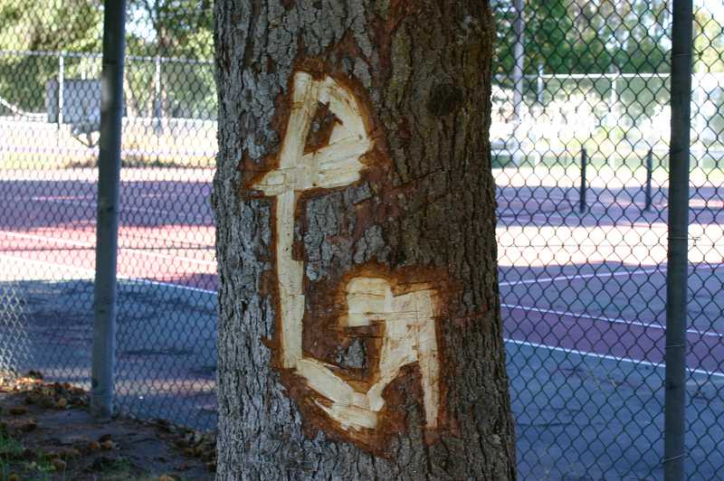 by: JASON CHANEY - One recent incident of vandalism includes the carving of large initials into a tree at Ochoco Creek Park