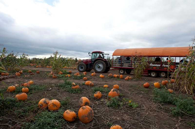 by: BAUMAN FARMS  - Bauman Farms host a fall festival throughout October, which includes wagon rides to the pumpkin patch.