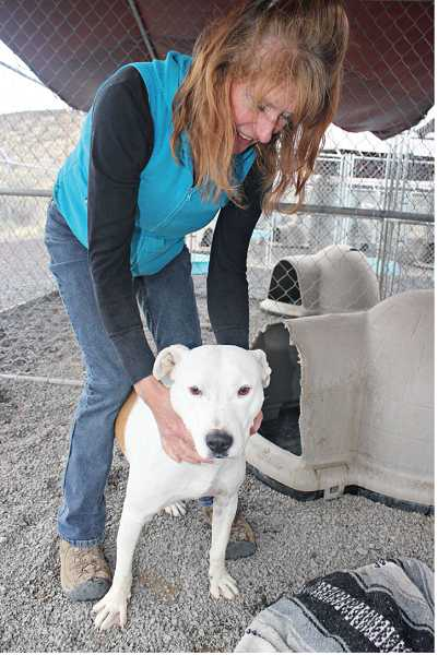 by: HOLLY M. GILL - Volunteer Marlene Johansen has a soft spot for 'Max,' a pit bull, who has been at the kennels for the past year.