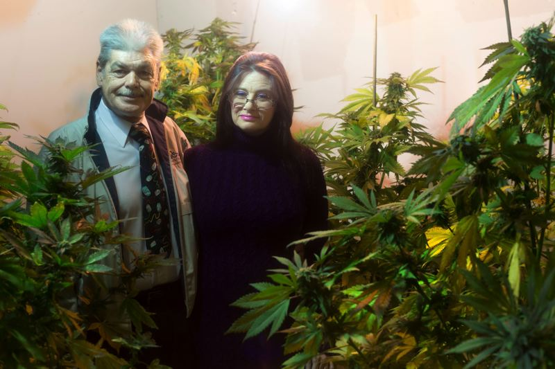 by: PHOTO BY: JONATHAN HOUSE - Medicinal marijuana is grown in the 'Bloom Room' of Mike Mullins and Jenifer Valley's small operation just east of Interstate 205 in unincorporated Clackamas County.