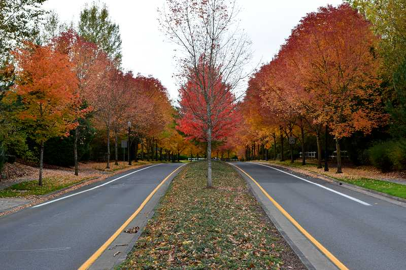 by: COURTESY OF GARRETT SCHWEIGERT - This shot of Sunset Boulevard displays Sherwood in all of its fall colors.