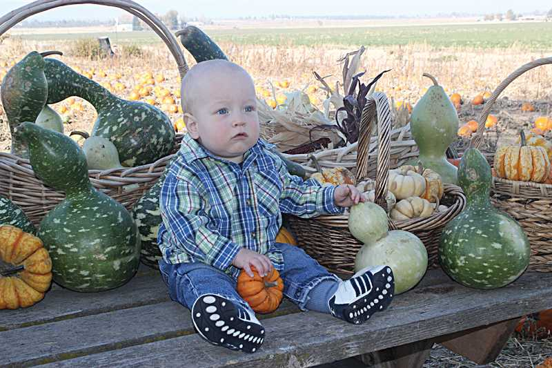 by: HOLLY M. GILL - Eleven-month-old Josiah Sheridan sits among a selection of pumpkins and gourds at Milne's Pumpkin Patch, just west of Culver. On Friday, a group of preschool children from the Culver Christian Church visited the farm, accompanied by preschool director Jenna Sheridan, Josiah's mother.