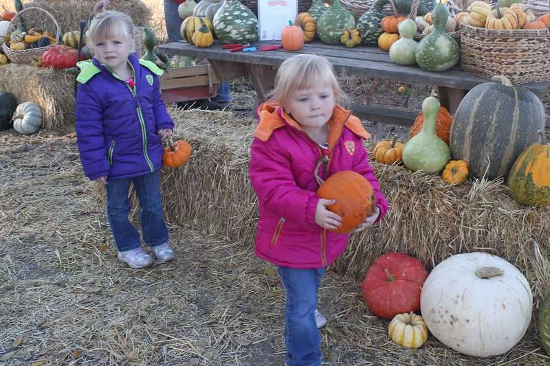 by: HOLLY M. GILL - Three-year-old twins Katie, left, and Anna Puddy make their pumpkin selections.