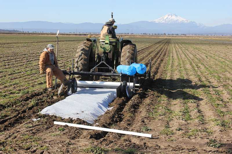 Workers roll ag cloth out on Clowers Farms fields near Northeast Dogwood Lane in Madras.