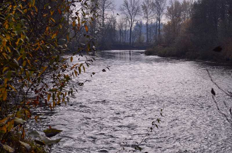 by: RAY HUGHEY - Lurking below the waters of the Molalla River as its winds its way around Canby is a resurgent fishery that is this area's little secret.