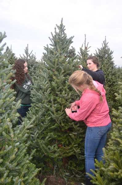 by: JANIS BRENTANO - St. Paul High School FBLA members Emily Vela, left, Cameron Stone and Sydney Brentano tag a pre-sold tree in preparation for their Christmas tree fundraiser. Hundreds of trees are available for purchase and all profits benefit the club.