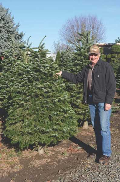by janis brentano ron franke of frankes christmas trees in woodburn has been growing christmas trees for more than 30 years and advises the best way to - Christmas Tree Farms Colorado