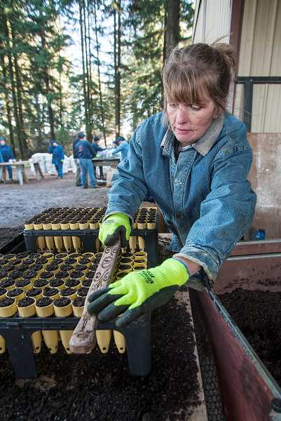 by: JOSH KULLA - A select group of inmates from the states only womens prison recently planted more than 50,000 violets as part of a project that will eventually install thousands of host plants for butterflies at four restoration sites in Oregon.