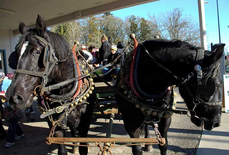 by: NEWS-TIMES PHOTO: JOHN SCHRAG - Families bundled up and braved the cold for rides atop a hay wagon pulled through downtown Forest Grove by this powerful team of horses.
