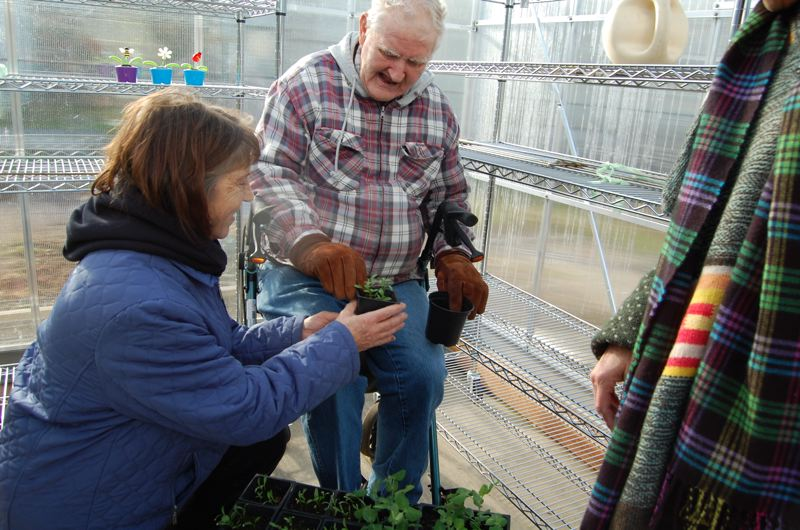 by: PHOTO BY: RAYMOND RENDLEMAN - Gladstone Mobile Home Park resident Jeannine Shockman helps her neighbor Richard Schooley re-pot vegetable starts in one of their complex's new greenhouses.