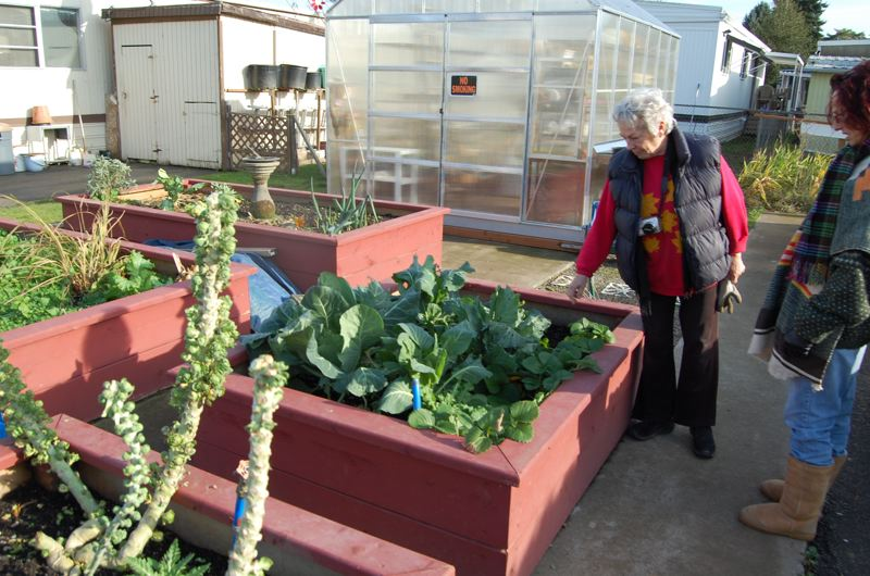 by: PHOTO BY: RAYMOND RENDLEMAN - Gladstone mobile-home neighbors Arnetta Guion and Jennifer Roeseler discuss when to harvest cabbage and Brussels sprouts, hardy vegetables that have survived the recent December freeze.