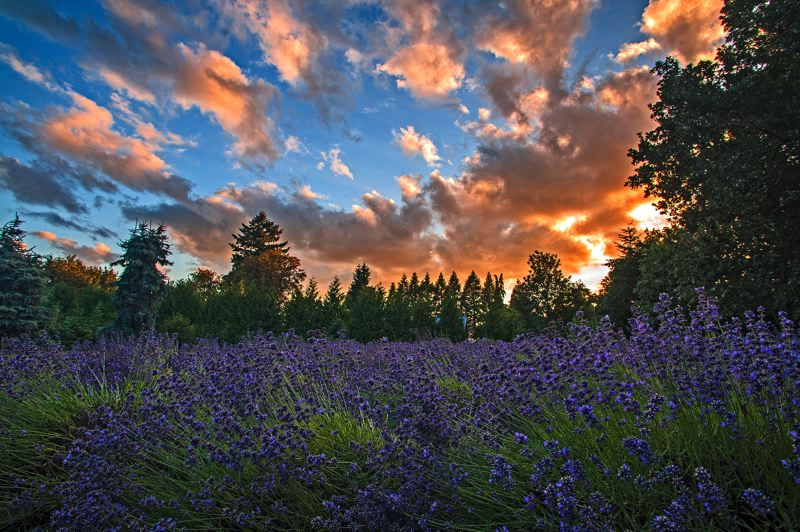 by: SPOKESMAN PHOTO: JOSH KULLA - The Willamette Valley during summertime is hard to beat, as this sunset photographed at the Barn Owl Nursery in the Stafford area demonstrates.