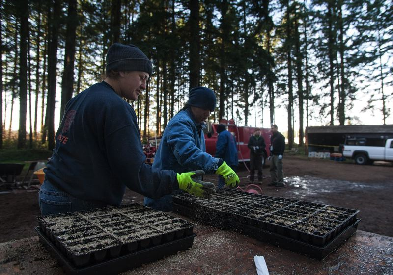 by: SPOKESMAN PHOTO: JOSH KULLA - Coffee Creek Correctional Facility inmates are taking part in an expansive project to help restore the Oregon silverspot butterfly. In November inmates planted more than 50,000 violet plants as part of their work.