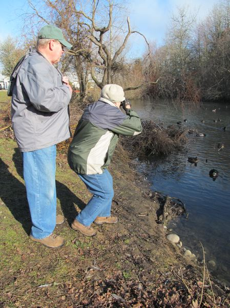 by: PHOTO BY ELLEN SPITALERI - Sally Shooks points out a nearby bufflehead duck, while her husband, Dick Shook, checks out the other waterbirds at a pond not far from North Clackamas Park in Milwaukie.