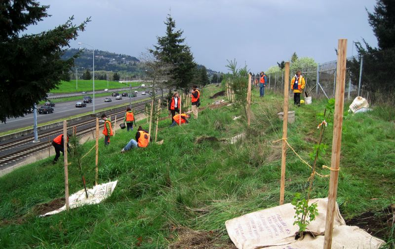 by: PHOTO COURTESY OF FRIENDS OF TREES  - Friends of Trees volunteers plant some of the 60,000 trees added along Interstate 205 in a four-year project. The corridor has high rates of air pollution and asthma.