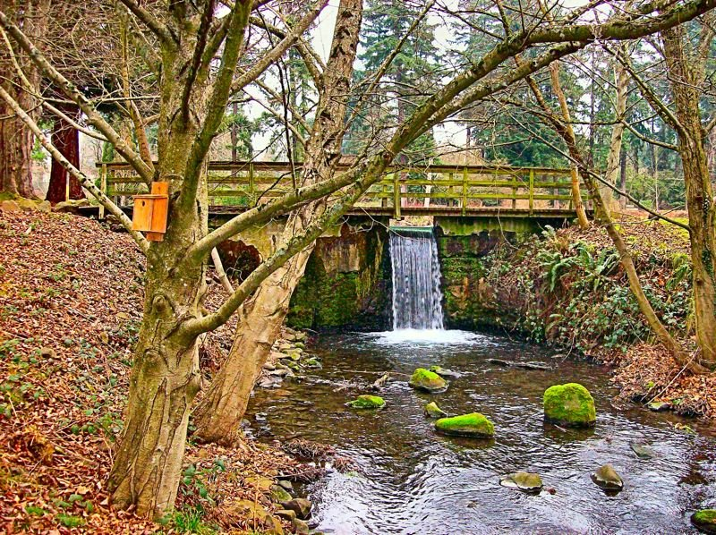 by: RITA A. LEONARD - The dam at the Crystal Springs Rhododendron Garden is leaking, and may need to be modified to allow migrating salmon access to their natural spawning grounds.