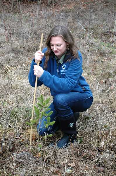by: ISABEL GAUTSCHI - Parks adjusts a stake marking a young, native tree planted on property along Goose Creek. The property is enrolled in the Clackamas River Basin Council's Shade Our Streams Program.